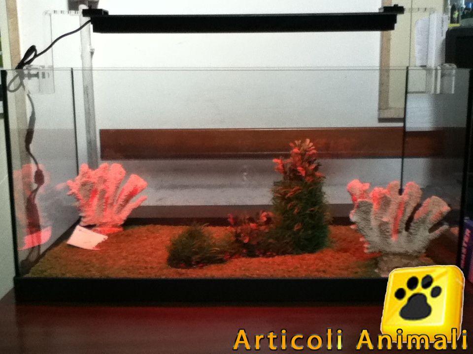 Plafoniere Con Animali : Acquario diversa 60 open 60*30*35h 54lt articoli animali