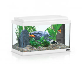 Acquario advance led bianco 40 41x20x27h con filtro e materiale filtrante