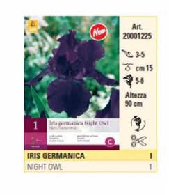 Bulbo di Iris germanica night owl